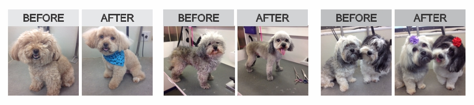 Mobile Dog Grooming Before After